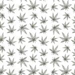 Cannabis Sketch