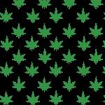 Cannabis2-12